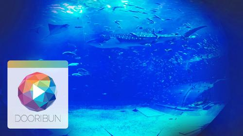 [DOORIBUN] 360VR HEALING CONTENTS '푸른 자유의 섬, 오키나와'